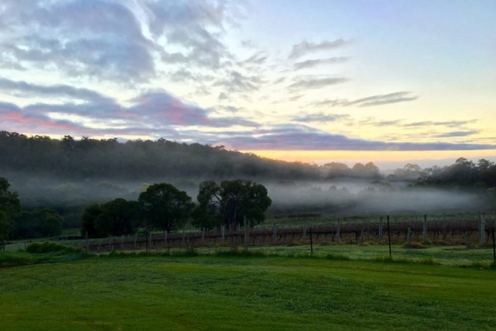 Early morning mist over our old block cabernet