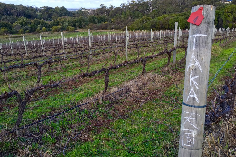 Pruning - Each person pruning writes their name on the post for quality checks